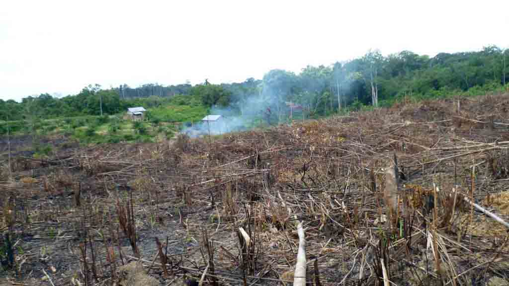 exploitation huile de palme deforestation 1