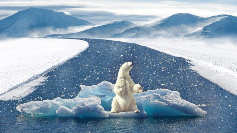 polar bear 2750604 1920 e1625587741961